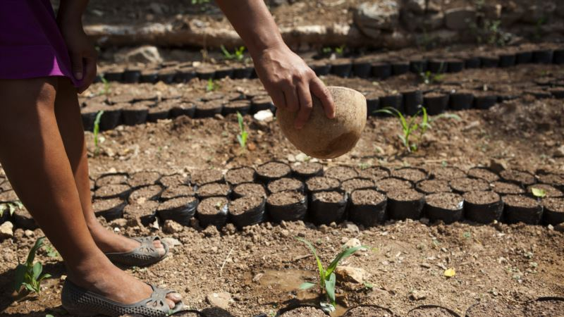 Central American Farmers Save Together to Cope With Climate Change