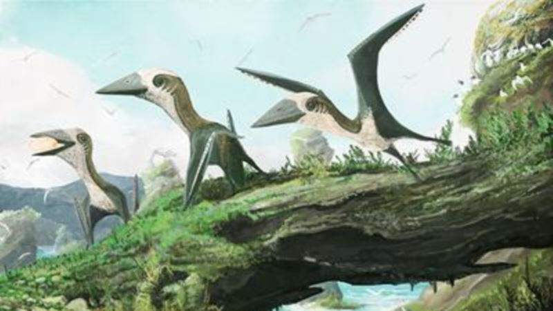 Tiny, Winged Dinosaur was Size of a Cat