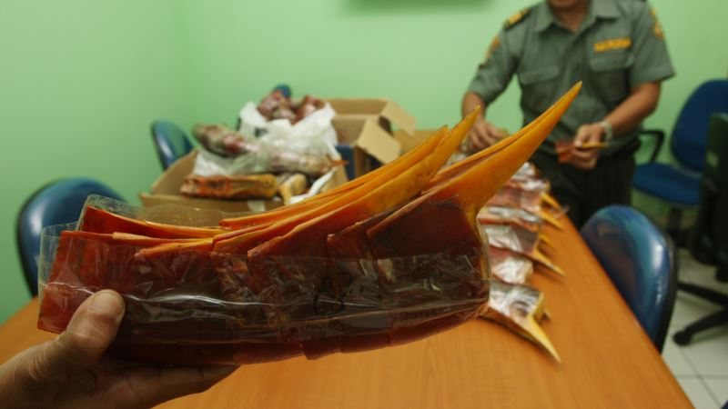Poachers Target Rare Bird's 'Ivory' Beak in Southeast Asia