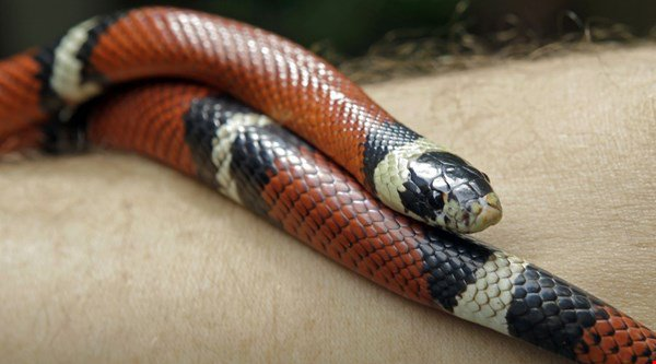 Paul Pogba just got a milk snake shaved into his hair