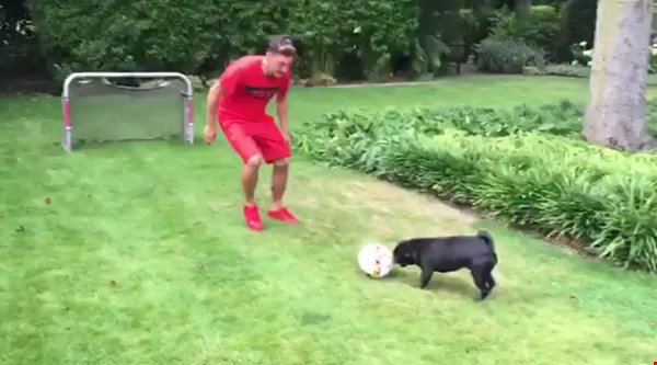 Mesut Ozil's dog is surprisingly good at football – better than Giroud?
