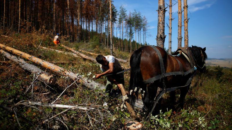 Elements, Humans Put Eastern European Forests Under Stress