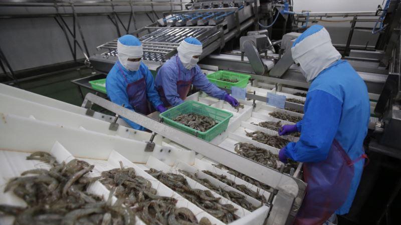Promises Unmet as Thailand Tries to Reform Shrimp Industry