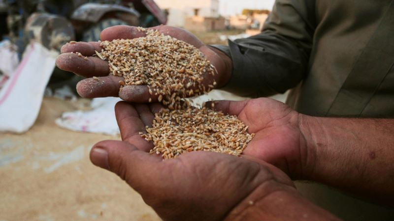 Battered by War, Syria's Wheat Crop Halved This Year to New Low