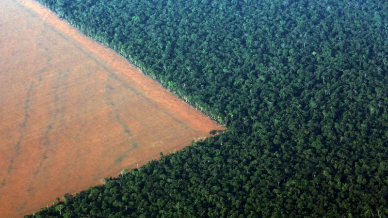 Study: Protection of Amazon's Biodiversity Could Fuel 'Fourth Industrial Revolution'
