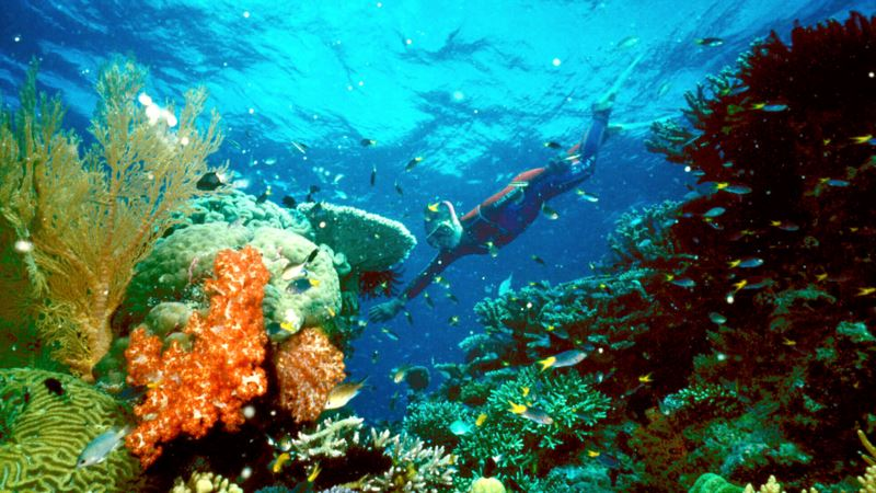 Experts: Global Warming Threatens Oceans and World Food Security