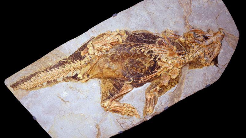 Scientists Decipher Color of 'Super Cute' Bristly Dinosaur