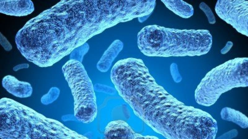Report: Antibiotic Resistant Bacteria Threaten Global Physical & Financial Health