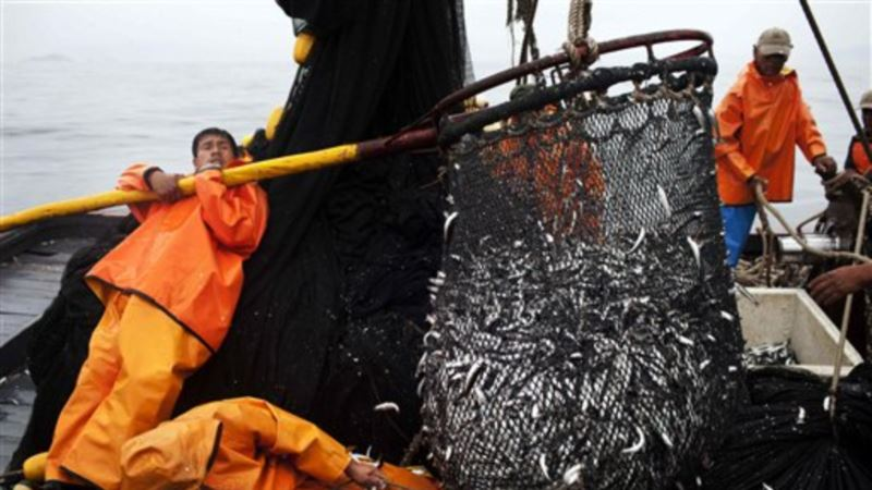 US, 12 Countries to Start WTO Negotiations to Ban Fishery Subsidies
