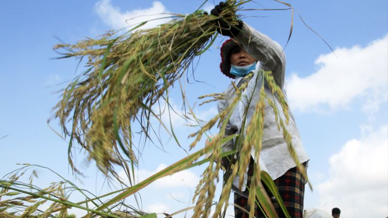 Poll: From Duped Maids to Rice Farmers, Asian Women Lead the Way in Businesses to Aid Society