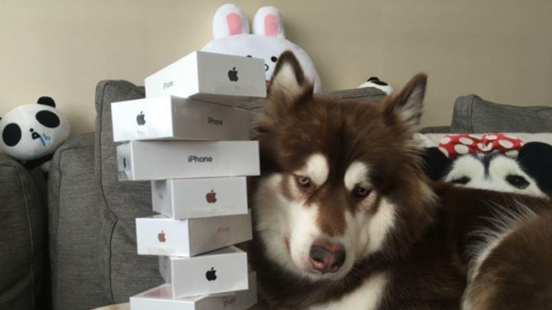 Chinese Man Gives Dog 8 New iPhones
