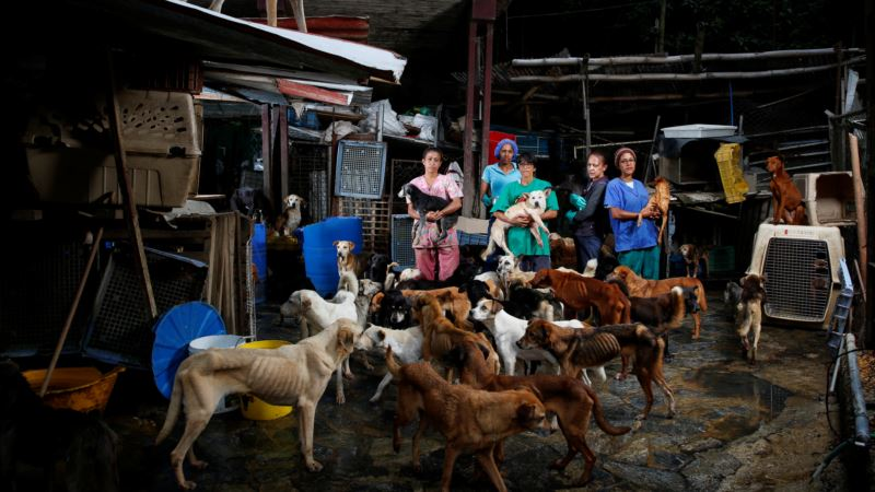 Struggling to Feed Families, Venezuelans Abandon Pets