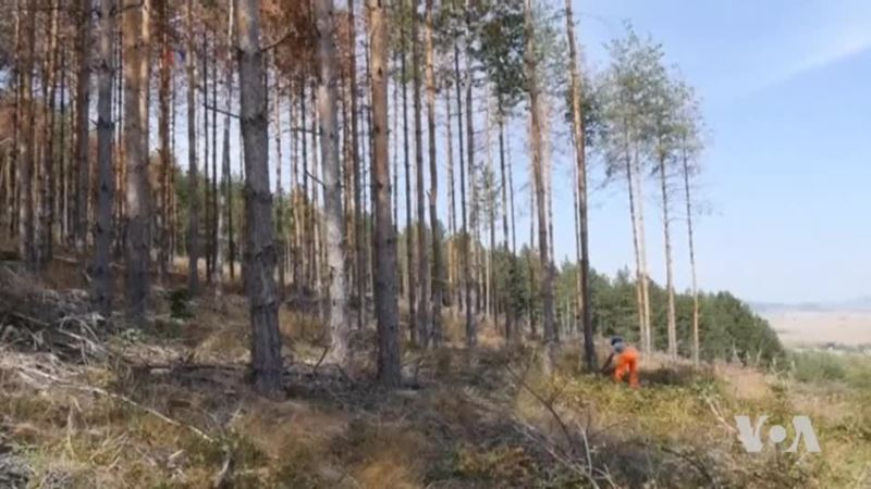 Elements, Human Activities Are Devastating Eastern European Forests
