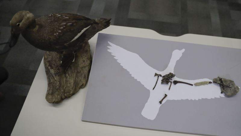 Ancient Bird From Dinosaur Era Probably Sounded Like Duck