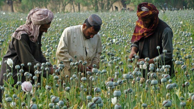 Afghan Taliban Struggle Financially Since Leader's Death