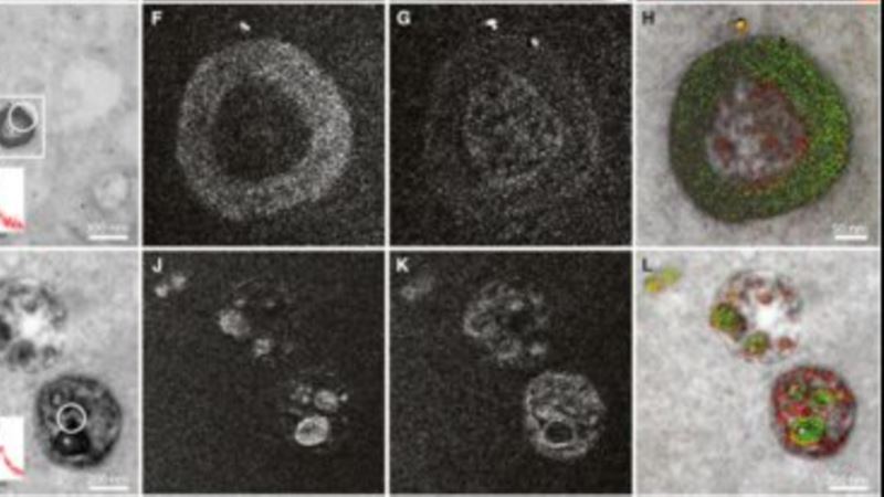 Scientists Bring Color to Electron Microscope Images