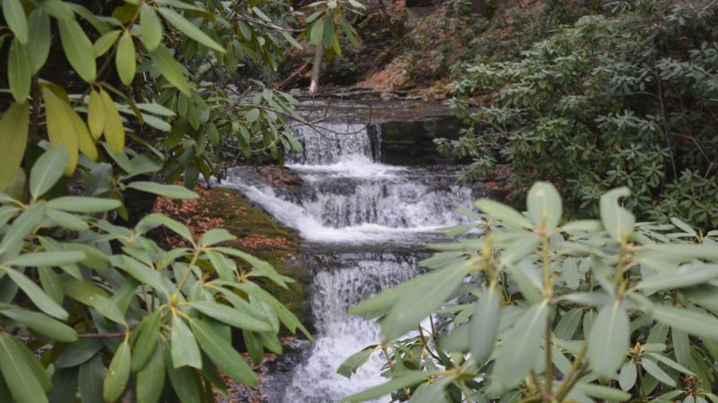 Crunchy Leaves, Roaring Waterfalls Make for Sensory National Park Experience
