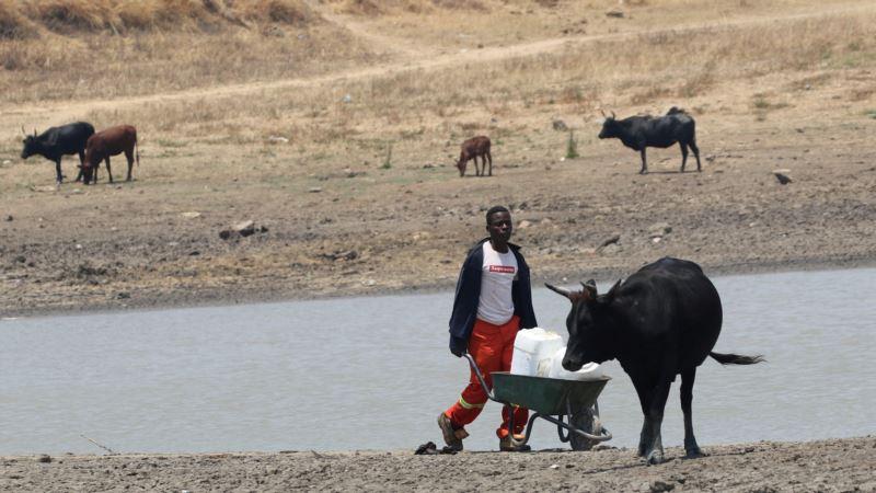 Zimbabwe Drought, Hunger Push Farmers to Seek Greener Pastures