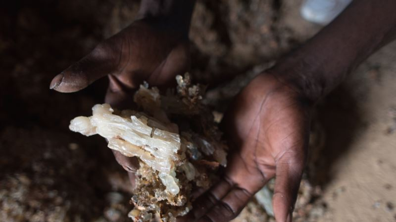 High Demand Threatens Frankincense Trade in Somaliland