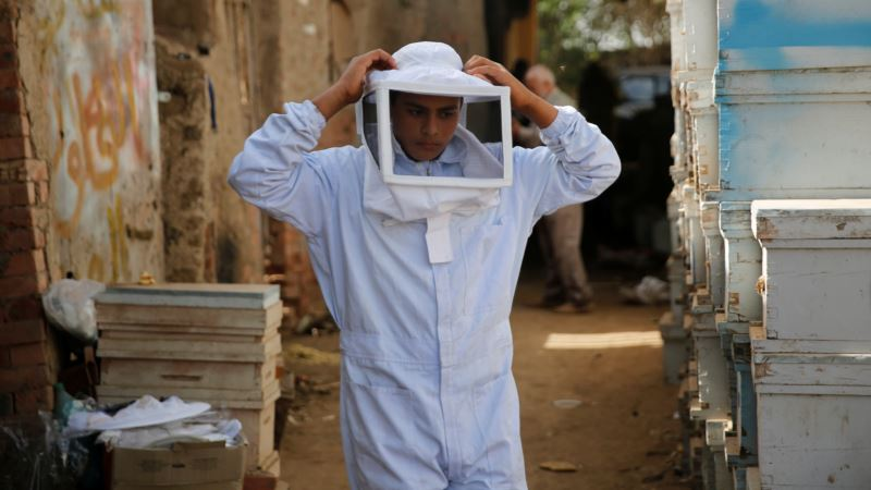 Egypt's Beekeepers Under Threat as Economy Slumps