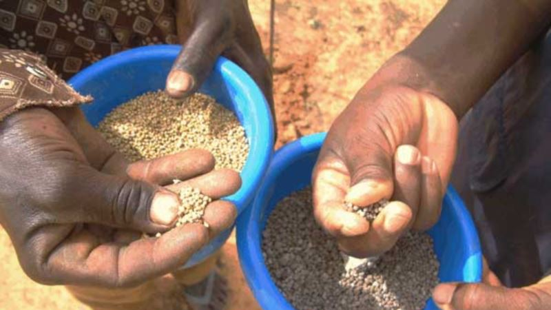 Malawi Probes Alleged Irregularities in Zambia Maize Deal