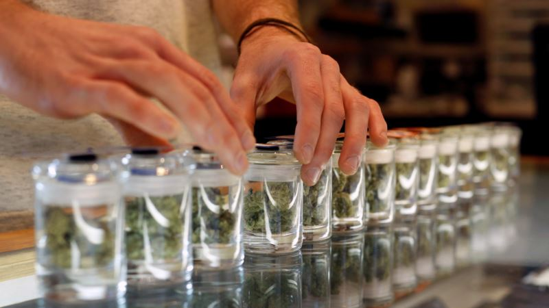 Germany Legalizes Cannabis for Medicinal Use