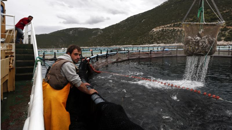 NOAA Plans to Open Federal Waters in Pacific to Fish Farming