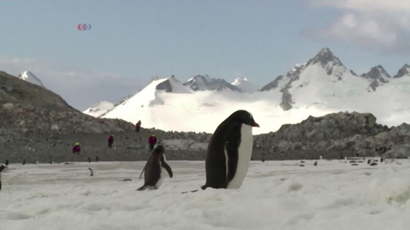 Robot Finds Colorful Life Under Antarctic Ice