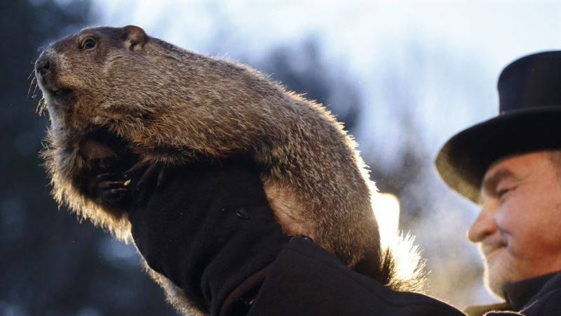 Famous US Groundhog Predicts 6 More Weeks of Winter