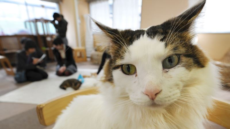 Study: Cats Not Linked to Mental Illness