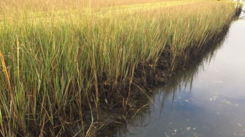 Study: Restoring Wetlands Could Help Fix Climate Change