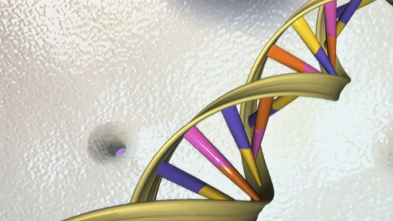 Scientists Soften on DNA Editing of Human Eggs, Sperm, Embryos: Report