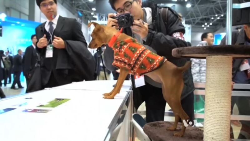 High Tech Animal Collar Helps Reveal Pet Emotions