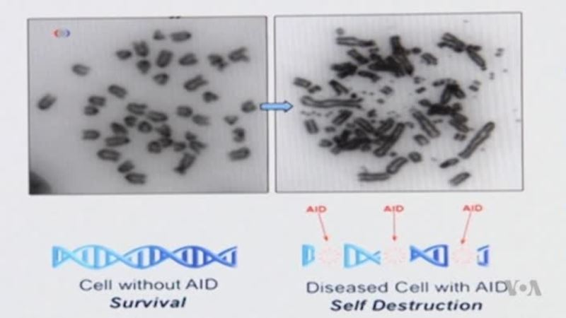 Genetic Research Shows Promise as Cancer Treatment