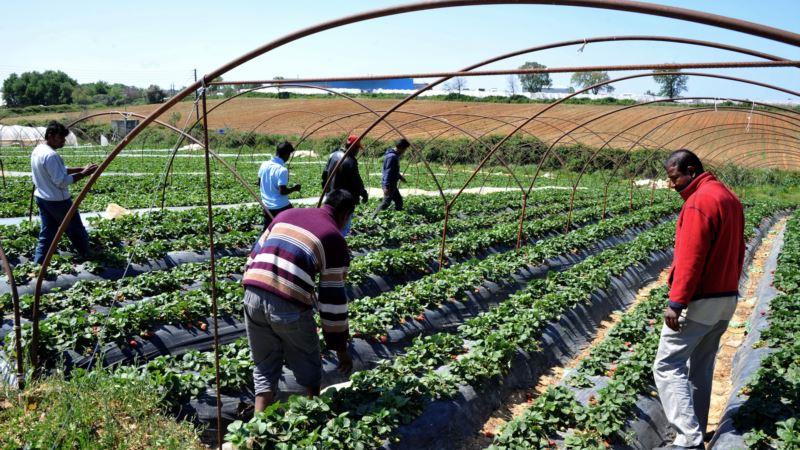Migrant Fruit Pickers Win European Court Case Against Greece