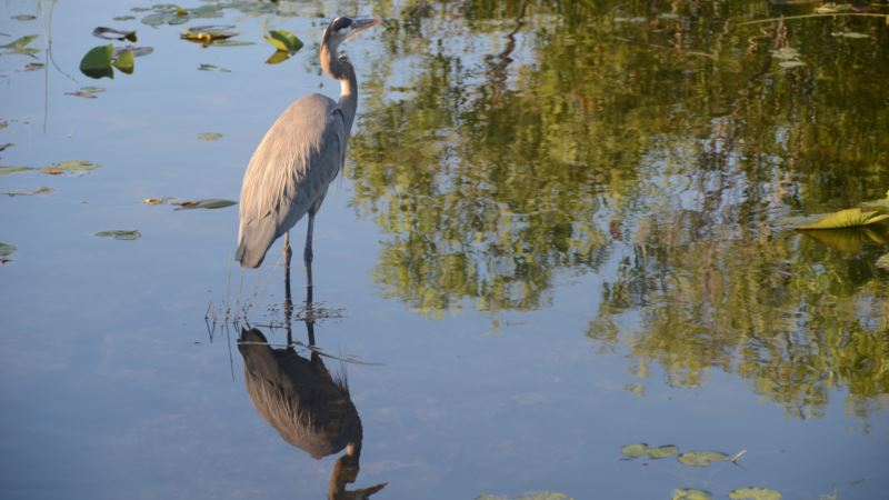 Nature Plays Starring Role in Florida Everglades