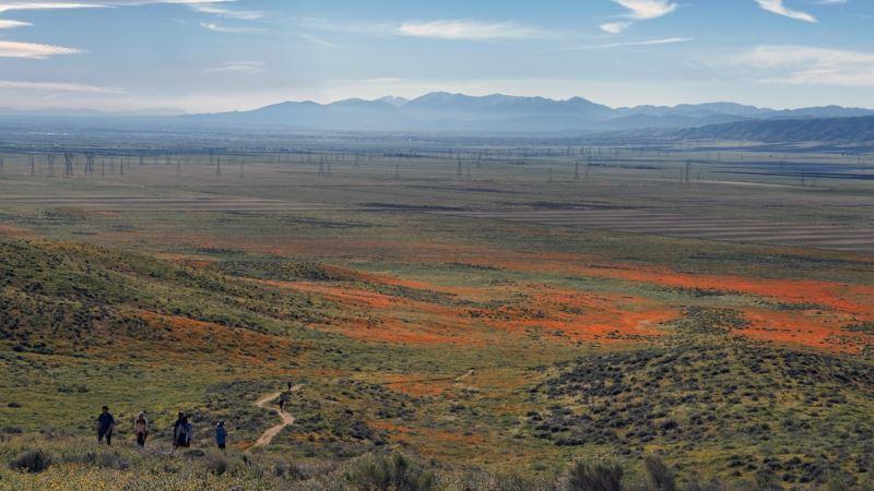 California Desert Super Bloom Attracts Tens of Thousands