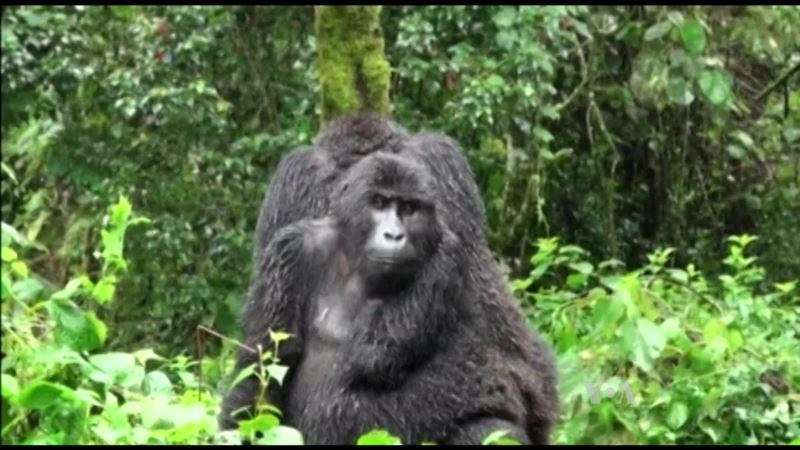 Over Half The World's Primate Headed Towards Extinction