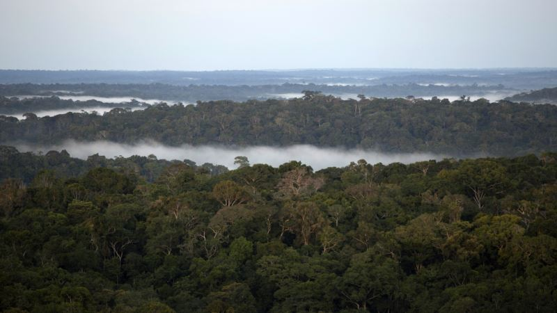 Brazil Launches Database to Fight Illegal Amazon Logging
