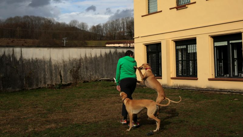 Puppy Love: Therapy Pooches Bring Peace of Mind at Spanish Psychiatric Center