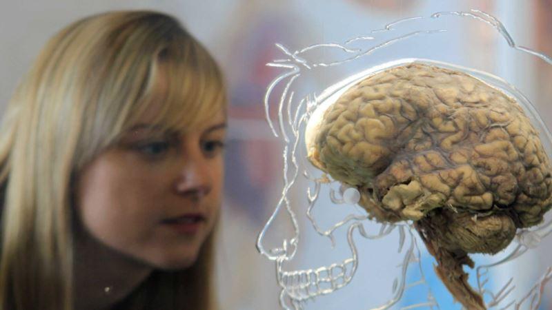Work on Brain's Reward System Wins Scientists One-million-euro Prize