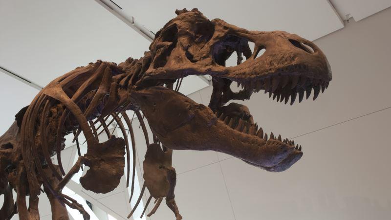 New Idea Shakes Up Dinosaur Family Tree for T. Rex and Pals