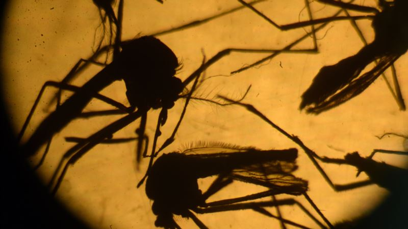 Experimental Vaccine Protects Against Two Strains of Malaria