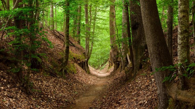 Following the Footsteps of Generations along Natchez Trace