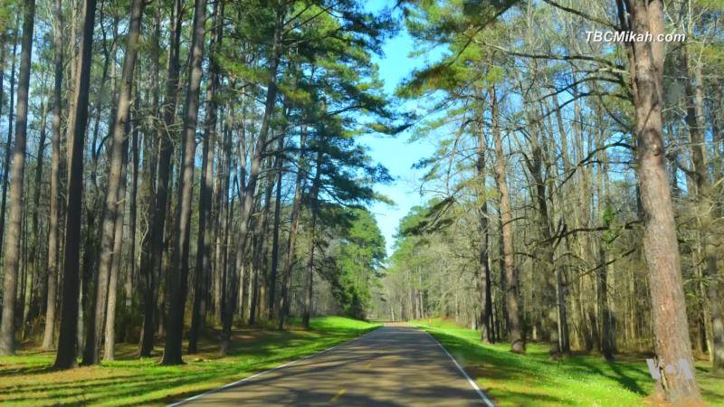 Traveling the Natchez Trace