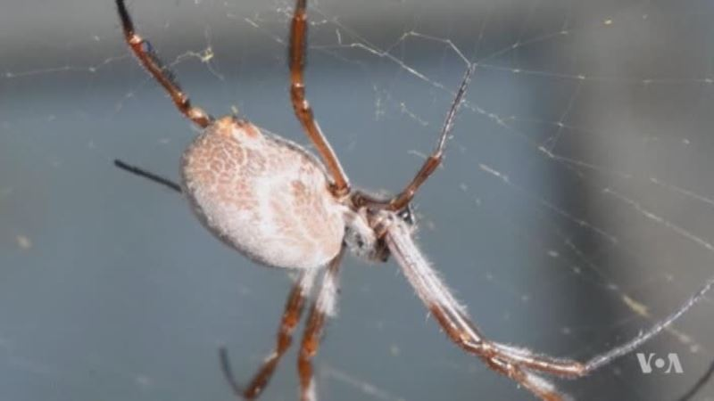 A Simple, New Way to Spin Spider Silk in the Lab