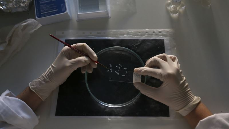 Scientists Tout Possible Cure for HIV Infection