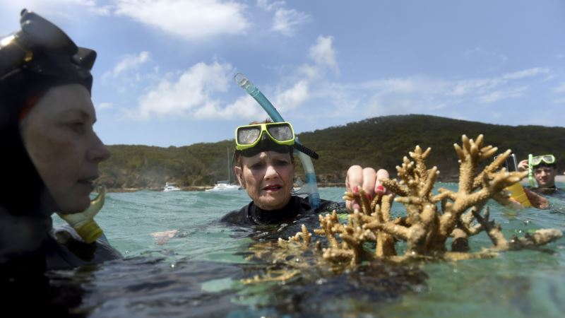 Cyclone Strikes Healthiest Part of Great Barrier Reef