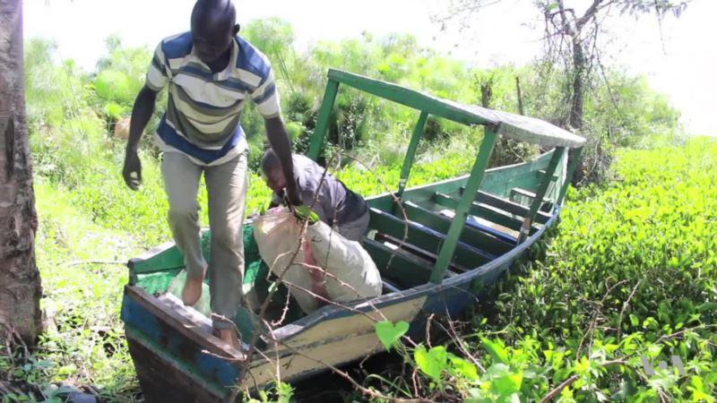 Kenyan Entrepreneur Turns Invasive Weed Into Profit