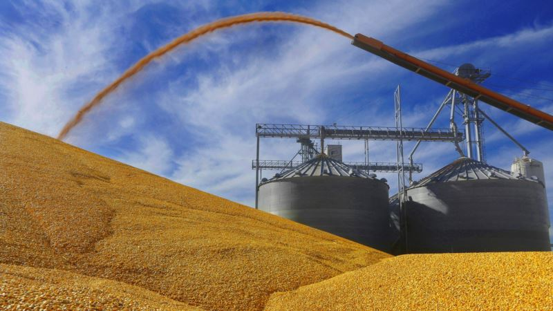 Toxin in Corn Adds to Woes of US Farmers, Ethanol Makers